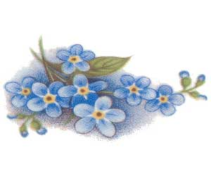 DFMNS - Forget-Me-Nots Small